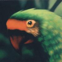 Nature_GreenAra_(GruenerAra)_60x60_(2002)
